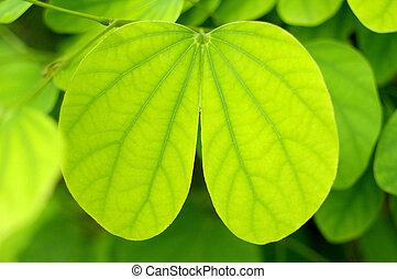 緑の葉, 中に, 中心の 形