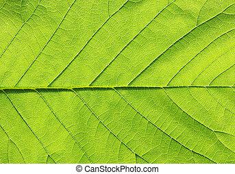 緑の葉, 手ざわり