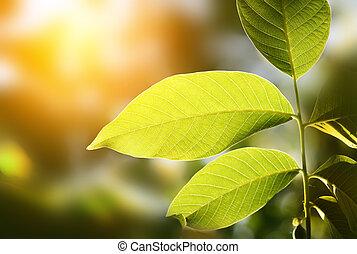 緑の葉, 背景, ぼやけ