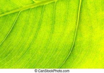 緑の葉, 背景, 手ざわり