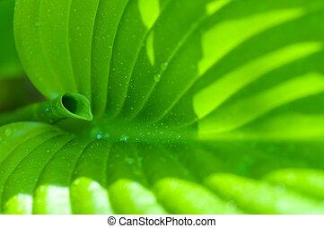 緑の葉, 花, 中に, 春, クローズアップ, ∥で∥, 水滴
