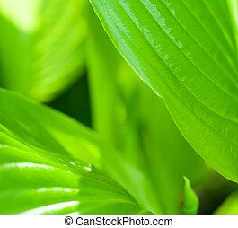 緑の葉, 花, 中に, 春, クローズアップ