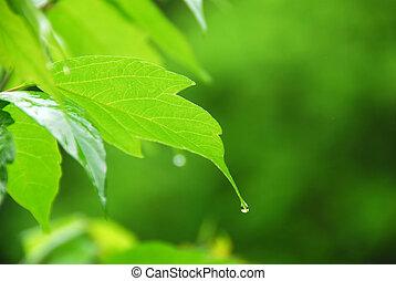 緑の葉, 雨