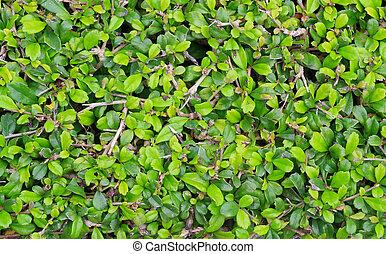 緑の葉, 黄色の背景