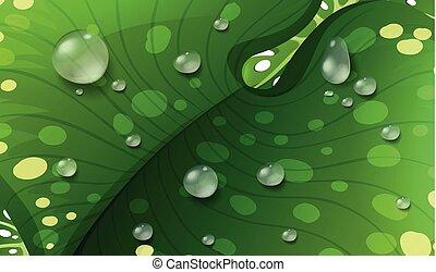 緑の葉, waterdrops