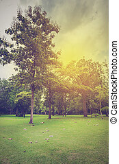 緑の風景, 空, 庭, 曇り