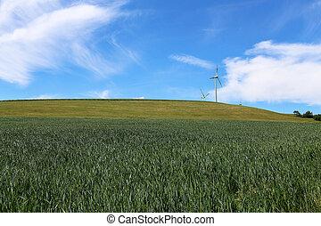 緑の風景, 青い空, フィールド, 小麦