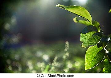 緑は 去る, ∥で∥, 太陽