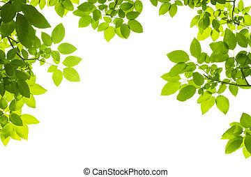 緑は 去る, 背景
