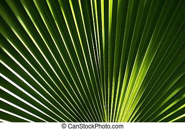 緑, やし 葉, 背景