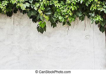 ∥, 緑, クリーパーの 植物, 上に