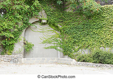 ∥, 緑, クリーパーの 植物, 上に, a, 古い, 壁