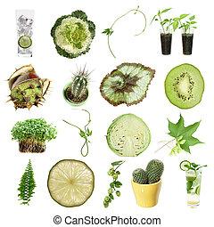 緑, コレクション, (green, オブジェクト, 隔離された, 上に, white)