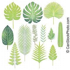緑, トロピカル, 葉, セット, ベクトル, イラスト