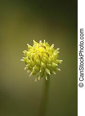 緑, マクロ, fleshy, 小さい, 植物