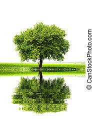 緑, 世界