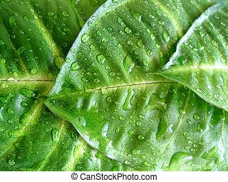 緑, 低下, 葉