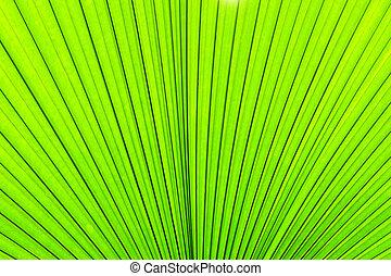 緑, 手ざわり, の, ヤシの木, leaf., 自然, 背景