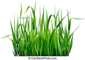 緑, 新たに, 草, 隔離された, 白
