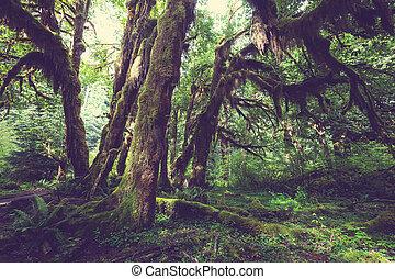 緑, 森林