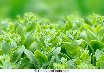 緑, 植物