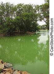 緑, 湖, 中に, 夏