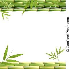 緑, 竹, 草, 隔離された, 白