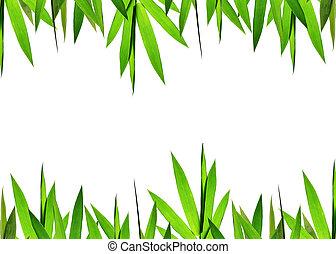 緑, 竹, 葉, 背景