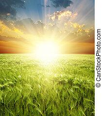 緑, 耳, 小麦, sunrays, 下に