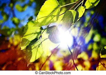 緑, 葉, ブランチ