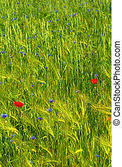 緑, 農業のフィールド, ∥で∥, 花