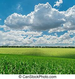 緑, 農業フィールド, 下に, 曇った空