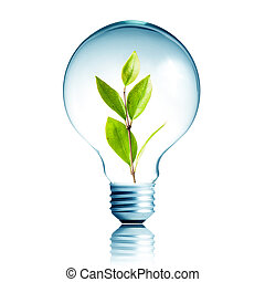 緑, eco, エネルギー, 概念, 植物, 成長する, 中, ∥, 電球