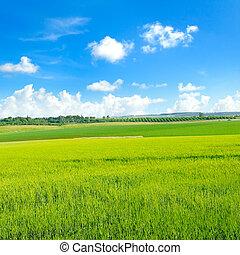 緑, sky., ムギ 分野, 青