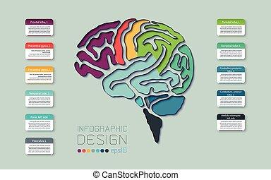 線, 図, 色, 設計された, ベクトル, テンプレート, infographics, 脳, スタイル