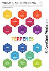 縦, フォーミュラ, ビジネス, infographic, terpenes, cbd, フルである, 構造, スペクトル