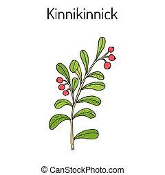 细枝, 或者, arctostaphylos, bearberry, 浆果, uva-ursi, kinnikinnick