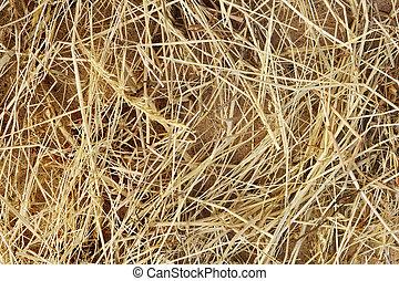 细节, 在中, 干燥, 草, 干草, 背景