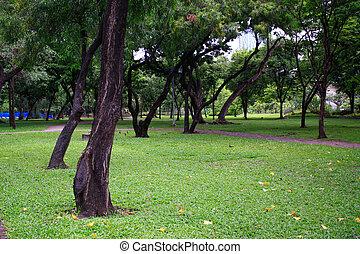 绿色的公园, 在中, the, spring.