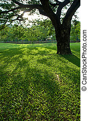 绿色的公园