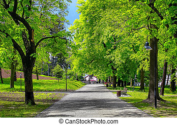 绿色的公园, 胡同, 在城市