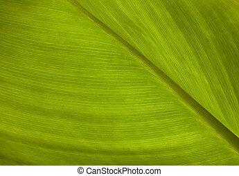 绿色的叶片, 结构