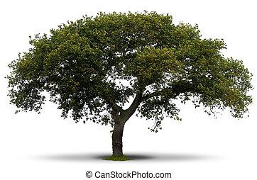 绿色的树, 结束, 白的背景, 带, 草, 在, the, 根, 同时,, 遮蔽