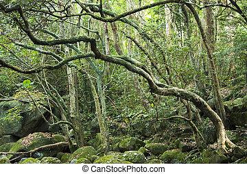 绿色的森林, 同时,, 河