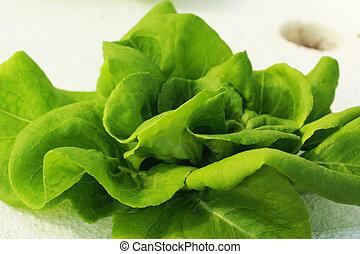 绿色的色拉, 蔬菜, 在中, 溶液培养, farm.