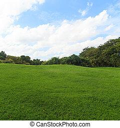 绿色的草坪, 同时,, 树, 在公园