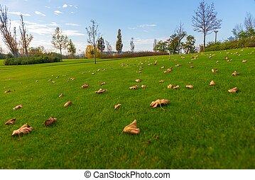 绿色的草坪, 在, the, 公园