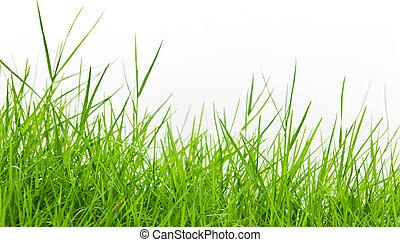 绿色的草, 在怀特上, 背景