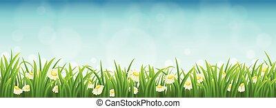 绿色的草, 花, 同时,蓝色, 天空