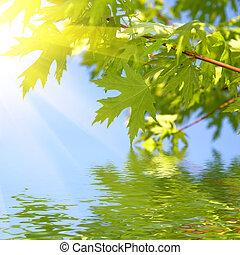 绿色, 春天, 离开, 对, 蓝的天空